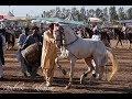Horse Dance During Neza Bazi in Pakistan | Amazing Horse | Dance Pakistan | Youtube Video | Dancing