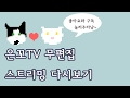 [은호,고야] 2017년2월10일(금) 스트리밍 편집없는 슬로TV Cat Slow TV