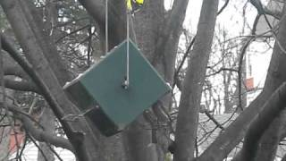 Goldfinches And House Finches Visiting Bird Feeder By Squirrel Proof Rollerfeeder.rollerfeeder