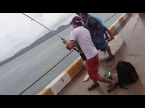 ตกปลาทะเลชายฝั่ง