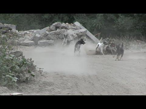 Саратовские псарни