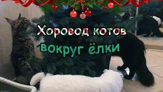 Хоровод котов вокруг ёлки