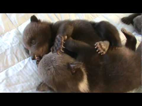 Baby Bears ~ Play Time!