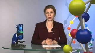 Углеводы, их роль в жизнедеятельности клетки