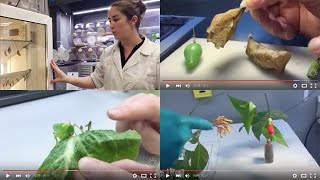 Behind-the-Scenes Butterfly Tour!    California Academy of Sciences thumbnail