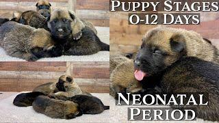 Puppy Developmental Stages: Episode 1 | Neonatal Period (012 Days)