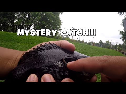 A MAJOR DISCOVERY in a TINY POND! I Can't Believe That They Were There! (Willow Grove, PA)