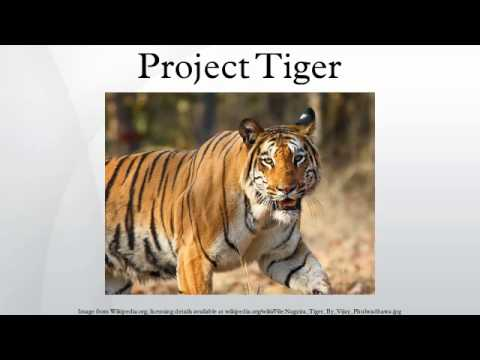 short essay project tiger