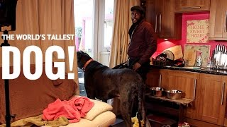 The World's Tallest Dog - Being Mr Brown