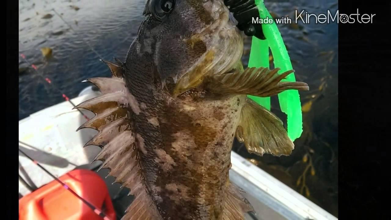 Fishing In Long Beach Harbor