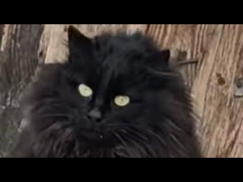 Черный кот Чернуха дрессировка умные животные 👍💪 Black cat Chernukha smart animals