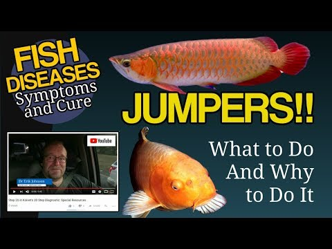 Jumpers, Fish Jump Out Of The Tank. Why? What Can You Do?