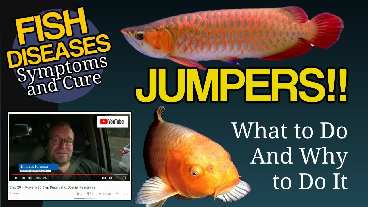 Jumpers Fish Jump Out Of The Tank Why What Can You Do Youtube