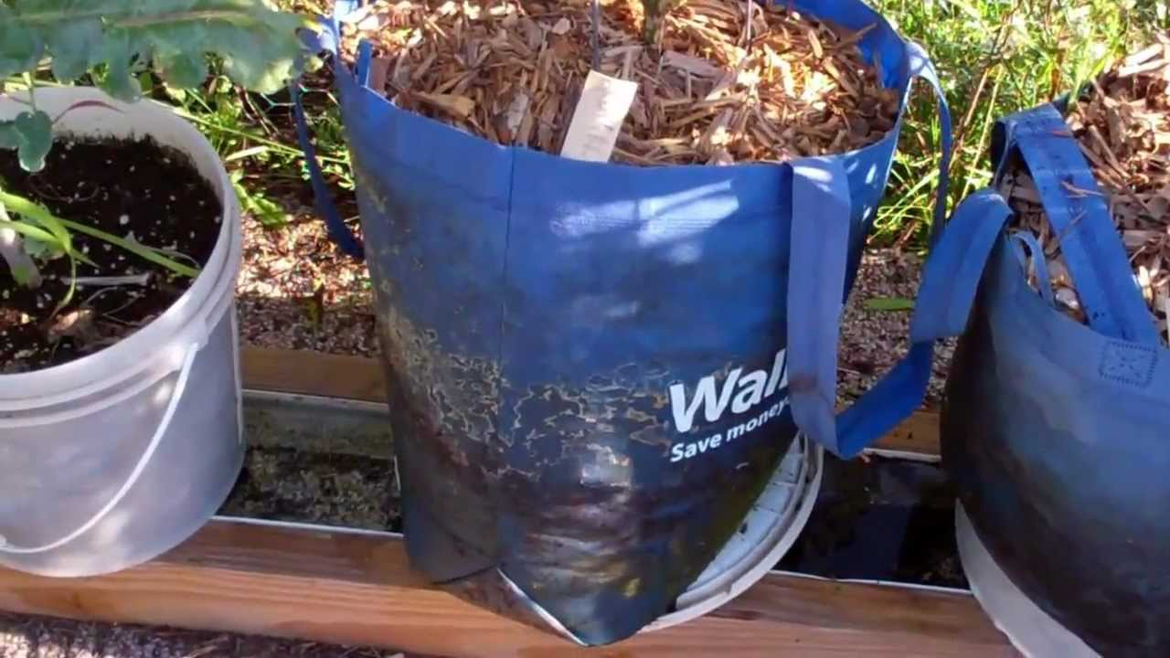 Using A Walmart Shopping Bag As A Grow Bag On The Self Watering Rain Gutter  Grow System!   YouTube