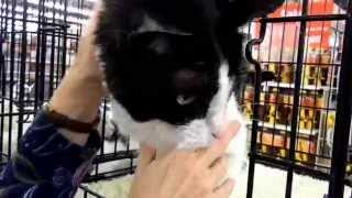 Busse the sweet senior cat needs a home