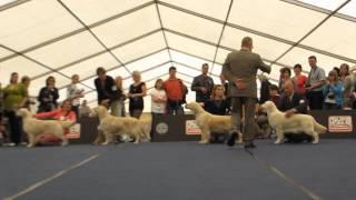 AT WDS World Dog Show Salzburg 18.05.2012  Golden Retriever