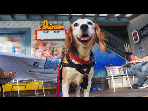 City Dogs Rescue & City Kitties by Stone Soup Films