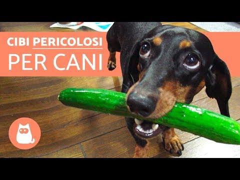 10 cibi proibiti ai cani - Cibi pericolosi per cani