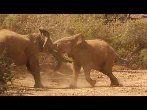Teenagers in the Ugab River - Elephants