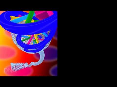 生命之泉-DNA
