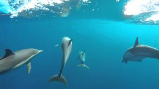 epic underwater dolphin footage