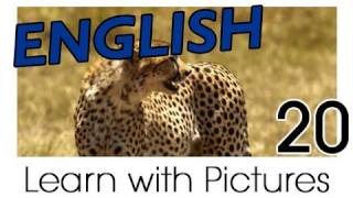 Learn English - English Safari Animals Vocabulary