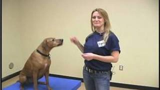 Dog Agility Exercises : Dog Training Obstacles: The Table