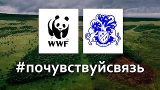 БЛАГОТВОРИТЕЛЬНЫЙ АУКЦИОН для Всемирного фонда защиты животных