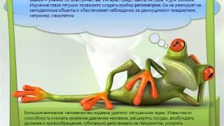Презентация на тему: лягушки и жабыWMV