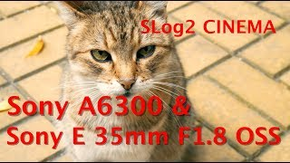 Sony SEL35F18 35 мм F/1.8 & Sony Alpha 6300 Slog2 - Cinema