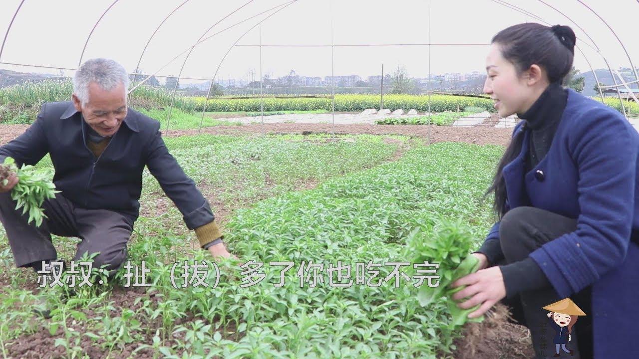 【舒家幺妹兒】农村正是种菜的季节,幺妹儿又种了几个品种。有你喜欢的么?
