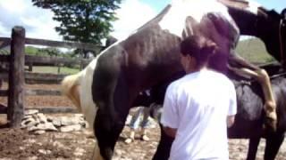 Repeat youtube video Coleta de sêmen - Garanhão Infértil (Periquito/MG)