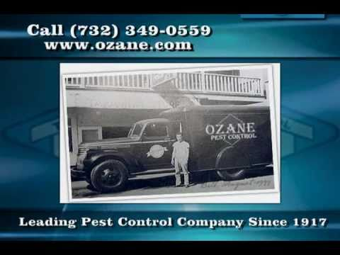 Pest Control In Toms River Nj Ozane Termite And
