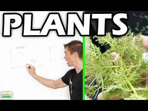 AQUARIUM PLANT FILTRATION: How Plants Can Help Filter Your Fish Tank