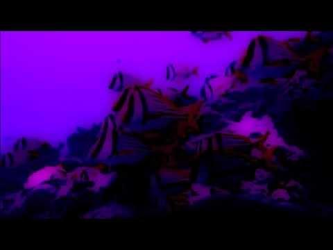 Die Schlafwandlerin - The Somnambulist - XTC Cover