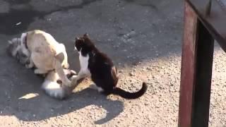 Новые позы котов. Любовь и кошки