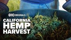 Is hemp on the verge of a comeback in California?