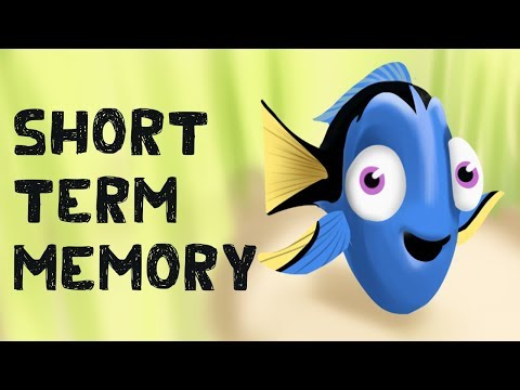 Short Term Memory (Free Test + Examples)