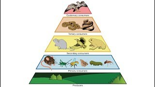 Study: Humans 0.01% of World's Biomass, Cause 83% of Extinctions