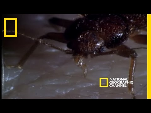 Bed Bugs | National Geographic