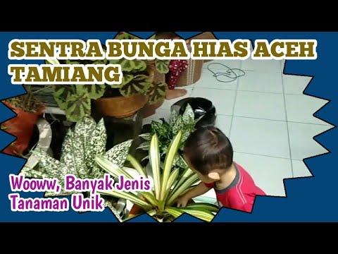 ide-bisnis-usaha-penjualan-aneka-bunga-hias-cantik,-berita-aceh-tamiang