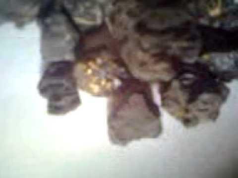 des meteorites