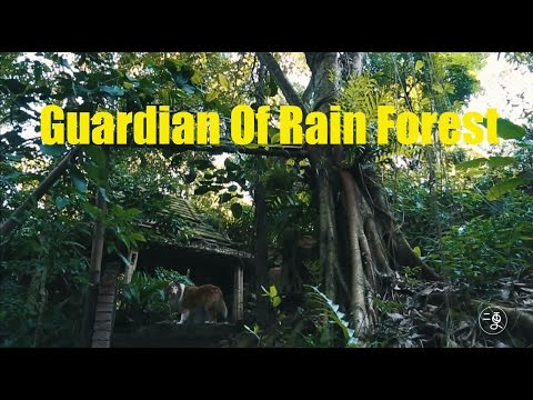 [environment] Guardian Of Rain Forest-rebuild Forest Project  |More China