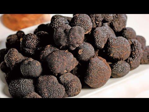 Выращивание вешенок на пнях. Что нужно знать?