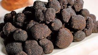 видео Поиск и продажа трюфеля
