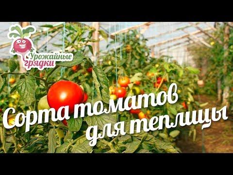 Самые лучшие маринованные помидоры Пошаговый рецепт с