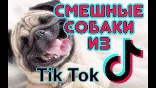 Смешные СОБАКИ из TikTok / Funny DOG from TikTok