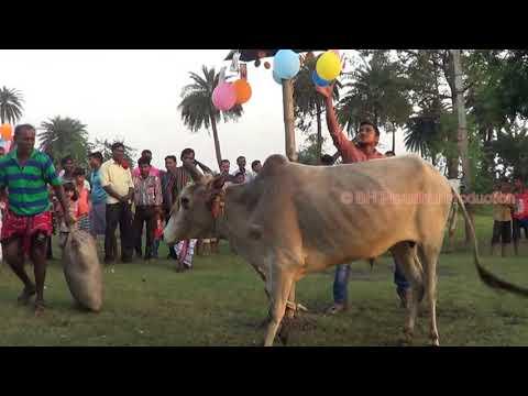 new santali video Durgapur sohrai khuntao 2017