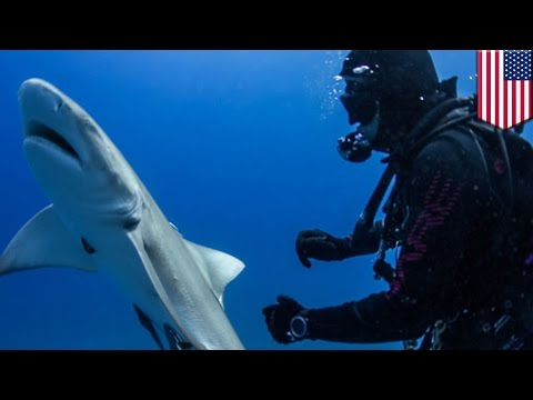 Thumbnail: Shark begs for help: incredible footage shows shark with hook in its body nudge divers - TomoNews
