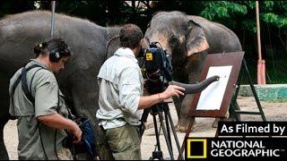 Original Elephant Painting - NGeo Wild on Tape